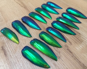 MULTIPACK Elytra Beetle Wing Covers - beetle jewelry, iridescent wings, insect wings, metallic green, nature study, loose parts, specimen