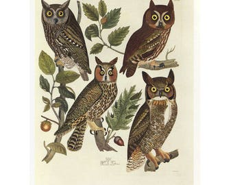 Owls Print Book Plate SALE Buy 3, get 1 more FREE