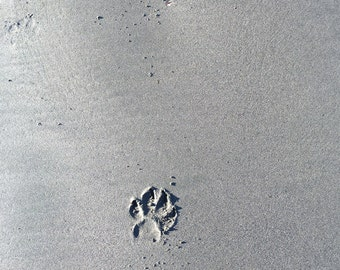 Paw Prints in Sand Dog Photography Handcrafted Photo Card Dog