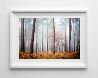 Nature Photography, Autumnal Foggy Landscape, Original Print, Woodland, Trees, Botanical Wall Art, Pretty Decor