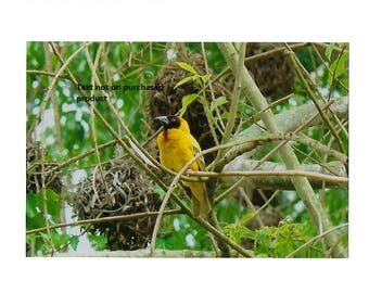 Yellow Orb Weaver photo card