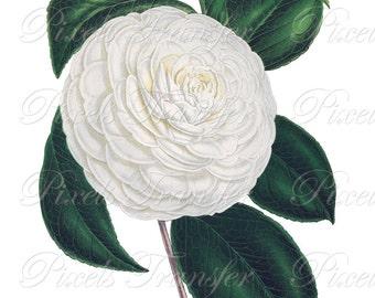 CAMELLIA Instant Download, WHITE Wedding Clipart, Image Transfer, Digital Download, Botanical Illustration no.334
