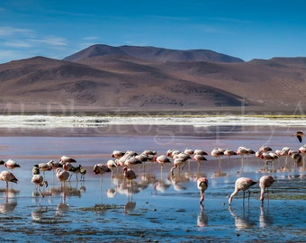 Colour Photograph of Flamingos (Immediate Download)