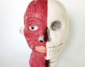 Anatomical Structures of the Human Head: A Study in Wool