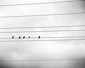 black and white photography birds on a wire 8x10 8x12 Fine art photography nature birds in flight minimalist photography winter grey modern