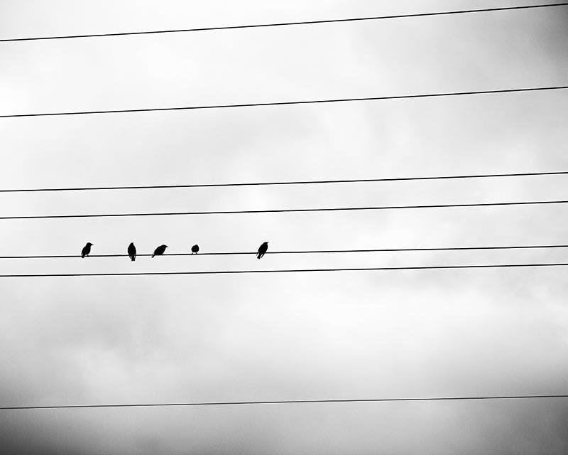 Schön Vögel Auf Drahtwandkunst Fotos - Elektrische Schaltplan-Ideen ...