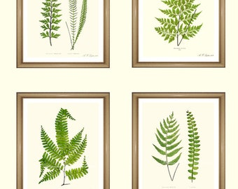 "Fern Prints.  Botanical Print Set. Any 4 fern prints. Ferns Wall Art. Fern print set.  5x7"" 8x10"" 11x14"""