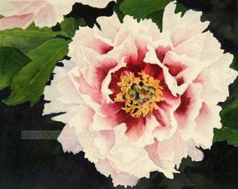 peony watercolor-peony painting-peony art-pink peony-flower watercolor-flower painting-fine art print-botanical waterccolor-botanical art
