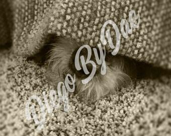 Puppy Nose Photograph