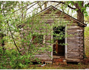 Abandoned Tourist Log Cabin Photo — Route 66 Photography — John's Modern Cabins Documentary Photo - Nature's Return — Lost Forgotten America