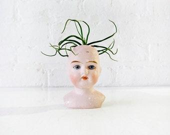 Stoned lil Medusa- Antique German Bisque Doll Head Air Plant Garden
