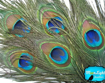 USA Natural Peacock Feathers, 10 Pieces - BIG NATURAL Peacock Tail Eye Feathers : 324