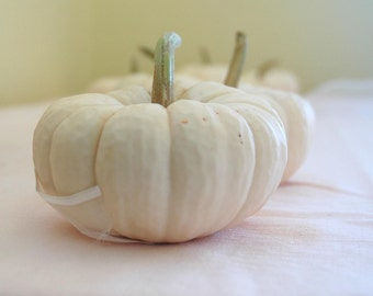 15 Mini White Pumpkins with SHORT Stems for Table Decor for late Summer or Fall Weddings