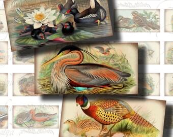Oiseaux (3) antique Collage Digital Sheet - ancien oiseau coloré sur vieux papier - Domino 30 pouces 1 x 2 pour les pendentifs, les aimants, craft