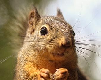 Woodland Animals, Woodland Animal Art, Woodland Prints, Squirrel Photo, Animal Prints, Cute Animals, Wildlife Photography, Douglas Squirrel