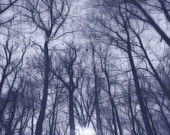 Blue Abstract Tree Art, Surreal Tree Photo and Sunlight, Sublime Tree, Woodlands Blue Print, Winter Trees and Sunlight, Winter Trees Forest