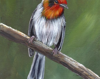 Bird Art - Bird Painting - Red Faced Warbler  -SFA- Original Wildlife Acrylic Painting - Bird lover Gift - Wall Art -  Realistic Bird