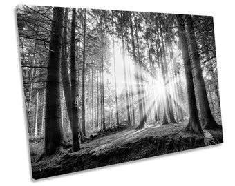 Sunset Forest Summer Black and White Picture Single CANVAS WALL ART Print