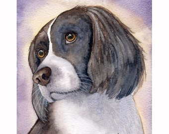 Springer spaniel dog 5x7 original watercolour painting by Susan Alison gun game Welsh sporting sniffer liver and white SusanAlisonArt