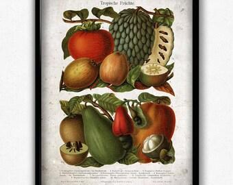 Tropical Fruit Vintage Print - Fruit Poster - Fruit Art - Fruit Picture - Home Decor - Home Art - Kitchen Art - Botanical Print
