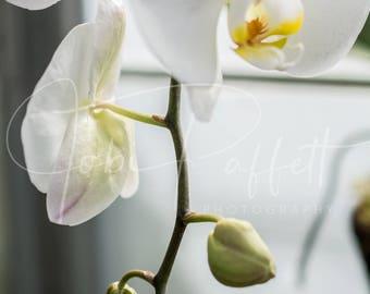 White Orchid Digital Print