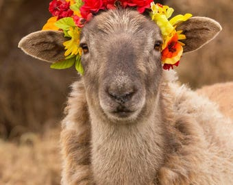 5x7 Sheep in a flower crown photography print