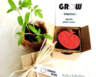 Tomato Seeds Paper Gardening Gift Box Kit with Pot - Mother's Day Gardening Gift - Housewarming Gift - Basil too