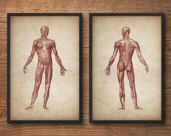 Anatomy print set of 2, Human anatomy posters, Anatomy home decor, Anatomy posters, Anatomy illustrations, Large print, Human muscle system