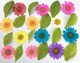 12 Pcs Pressed flowers bulk,Small natural Dried Flower bouquet,DIY materials,Frame Decoration,Hydrangea,chrysanthemum,pink,red,purple
