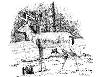 Eight Point Buck Note Card with envelopes, Pack of 6, Reproduction from original, Allan Sutley Artist, Pen and Ink