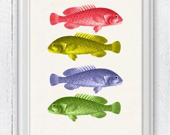 Black Friday Seaside wall art Multicolor fishes - Sea fish collage- sea life print-Funny kitchen wall decor SAS016