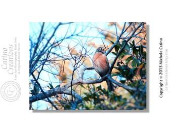 Spring Robin, Robin in Tree, Spring Bird tree branch, bird in tree, harbinger of spring 8x10 signed photo art