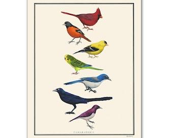 Natural Values print - Camaraderie - Bird Art - Rainbow - Nature Art - Inspirational - Ryan Berkley - Illustration - Wall Art - Diversity