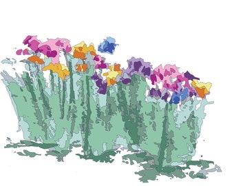 Colored Irises
