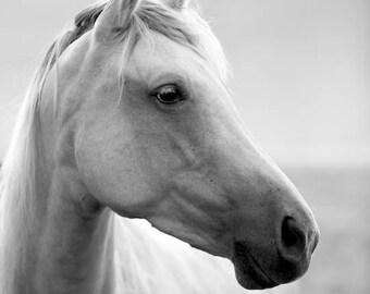 Horse Photos, Horses, Black and White, Equine Art, Equines, Grey, Fine Art, Summer Gaze