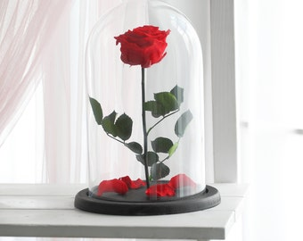 Beauty and the beast rose (Large), Forever rose, Enchanted Rose, Rose in glass dome, Forever rose, Red rose, preserved rose, Belle rose