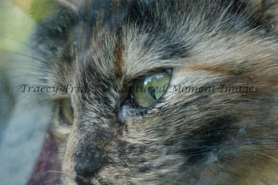Aurora's Eyes