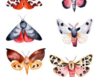 Butterflies and Moths Stickers