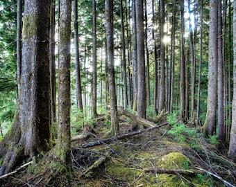 Fine Art Landscape Photography Print, Washington State Forest, Pacific Northwest Landscape Print, Wall Art, Nature Print, Washington Print