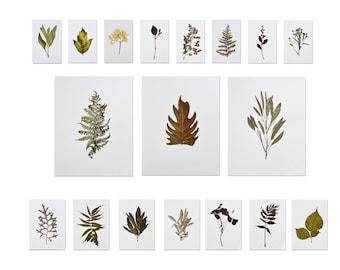 Original pressed flower art set Herbarium set Botanical art Dry flowers dining room wall art Plant art pressed botanicals Pressed flowers