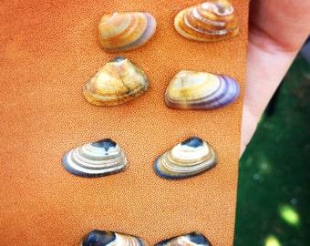 Shell Post Earrings