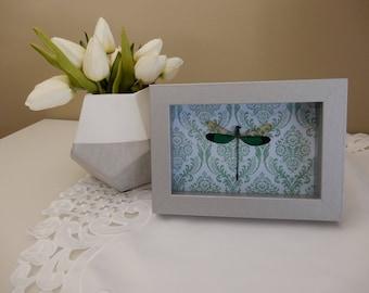Real Framed Dragonfly/ Damselfly- Taxidermy- Home Decor