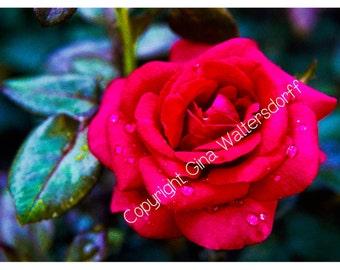 Romantic Love Rose, Red Rose, Romantic, Rose, Red, Last Minute Valentines Gift, 8x10 DIY