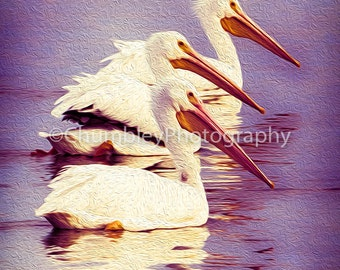 Pelican Trio- Photographic Print- Birds- Coastal-Beach-Wildlife-Ocean