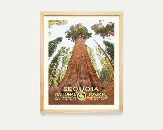 Sequoia National Park Poster - Sequoia Poster - Sequoia Art- California Art - Wall ARt - National Park Poster - WPA - WPA Poster - WPA Art