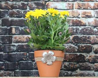 Terra Cotta plant pot