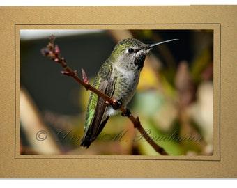 Hummingbird Photo Greeting Card - Bird Card Blank Inside - Blank Hummingbird Note Card - Green Gold Bird Photo - Anna's Hummingbird Card