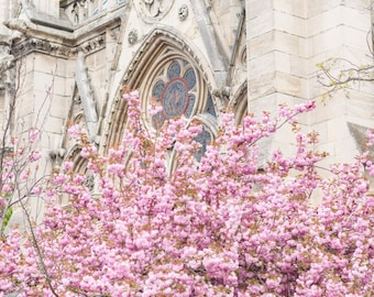Paris Fine Art Photography –Blossoms at the Rose Window, Paris in Spring, Gallery Wall, Cherry Blossoms, Large Wall Art