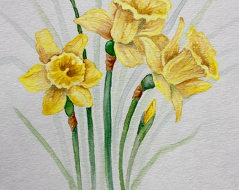 Yellow Trumpets of Spring