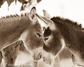 "Wild Burro print,Wild Horse Photo, Wild Horse and Wild Burro Photograph. Donkey photograph.""Yin and Yang II"""